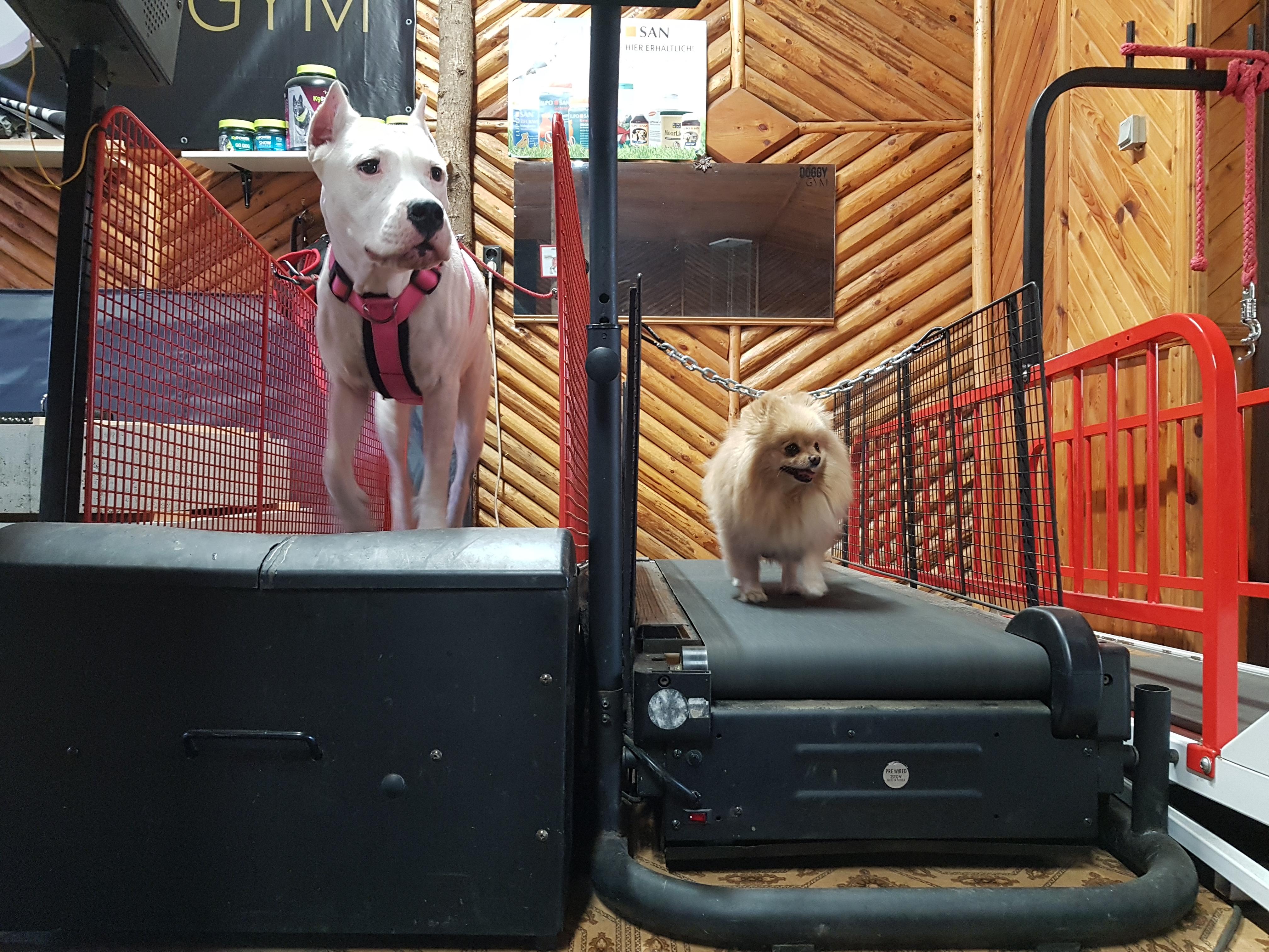 geriausi šunų prekybos rodikliai pinigus kaip internete